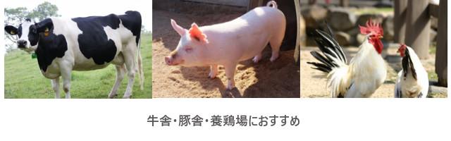 MP環境改良材用途 牛舎 豚舎 養鶏場